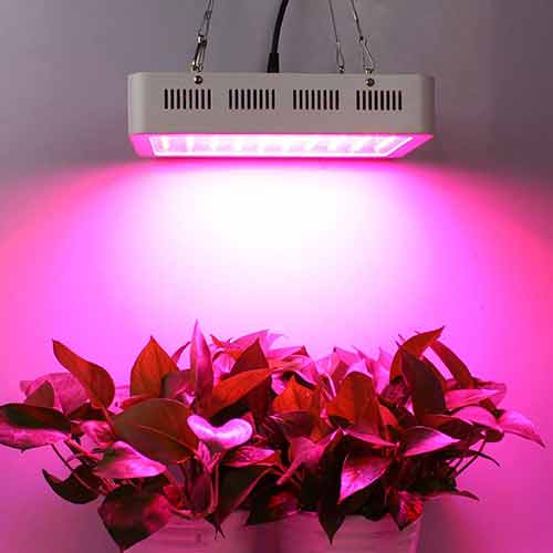 Best Led Grow Lights Review For The Money 2019